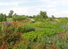 Open tuin Swadde Ikker