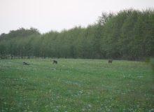 Landschapsexcursie Fauna