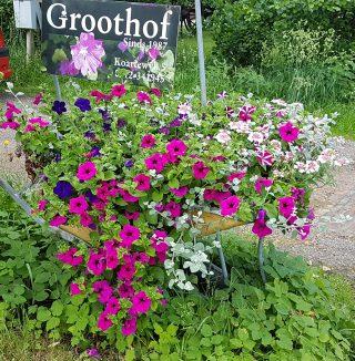 Open erf (haskap) kwekerij Groothof