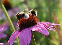 Tuininspiratie bij Tuincentrum Burgum: bijen, hommels en vlinders