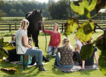 Demo paardencoaching