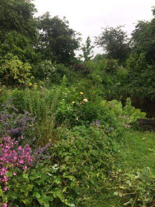 Open tuin Lieuwe Stins