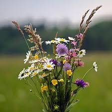 Workshop bloemschikken met wilde bloemen (GANNULEERD)