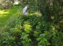Pop-up wandelroute naar Voedselbos Egypte