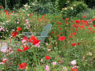 Open tuin Janna's Bloementuin